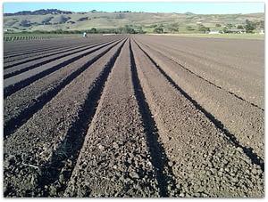 Gilroy farm field