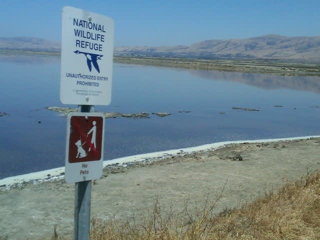 National Wildlife Refuge in Alviso
